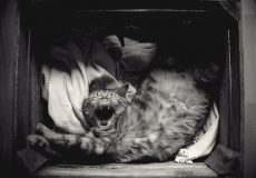 animal-photography-cat-in-basket