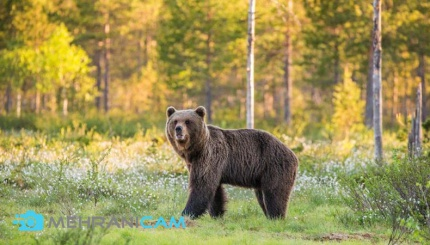 بهترین دوربین برای عکاسی از حیات وحش